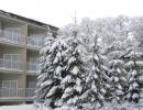 Общий зимой